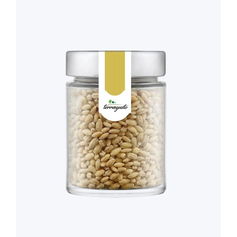 Orzo perlato secco di alta quota coltivato in Calabria di Terra e Gusto