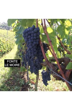 Il winebox del sommelier: espressioni di magliocco riserva